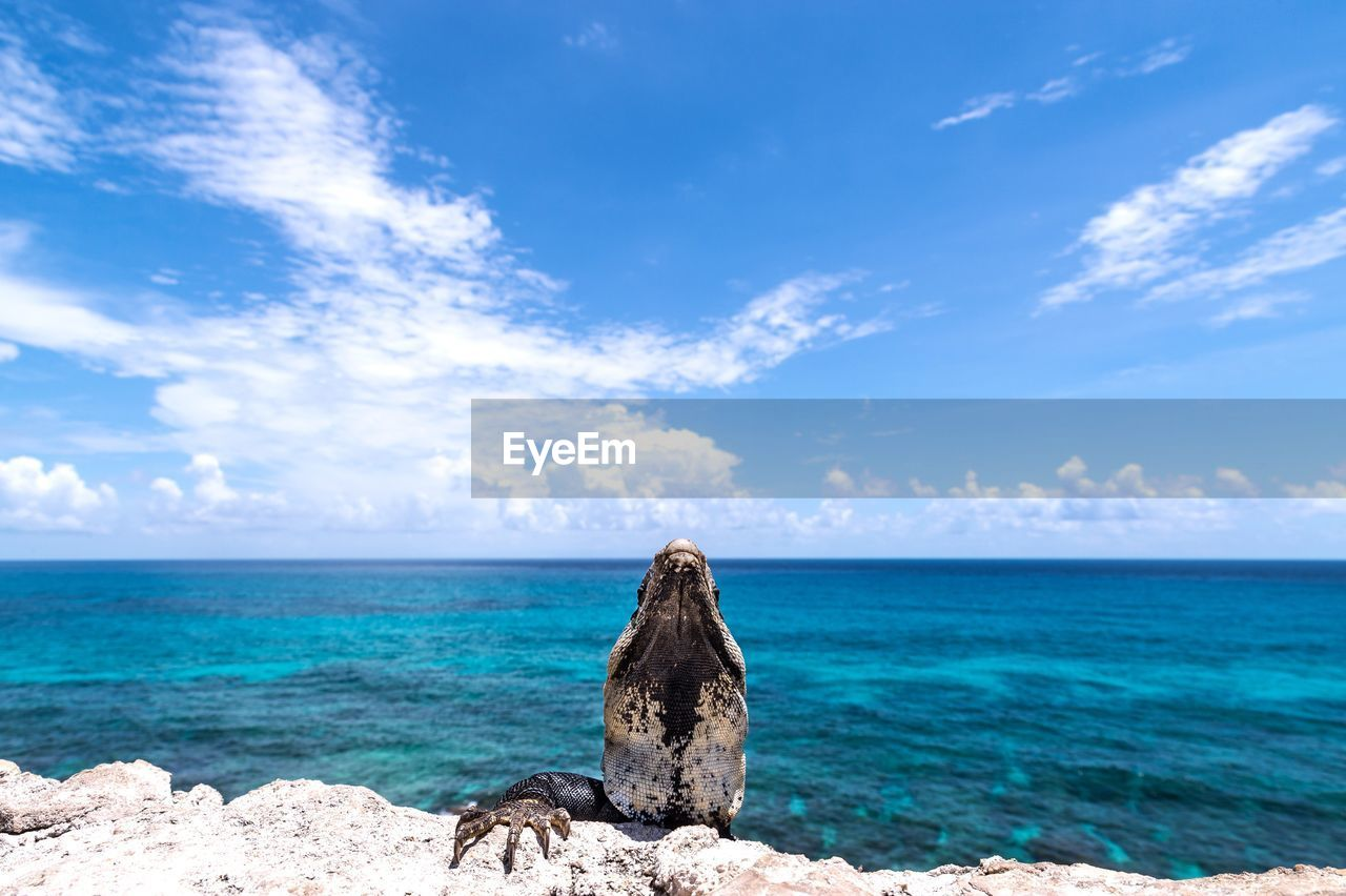 sea, sky, water, beauty in nature, scenics - nature, horizon over water, tranquility, tranquil scene, horizon, cloud - sky, blue, rock, solid, rock - object, nature, land, idyllic, day, beach, no people, outdoors, turquoise colored