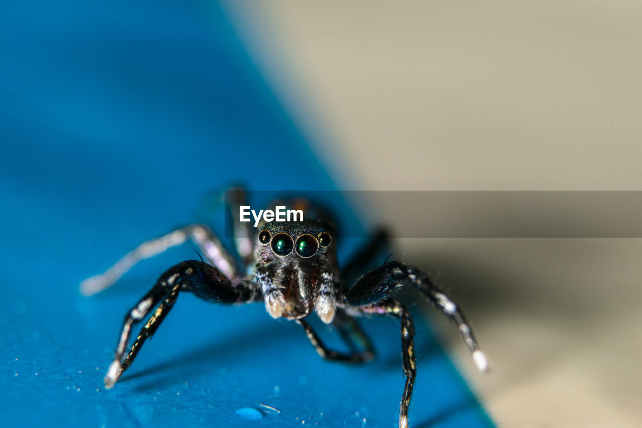 Close-Up Of Jumping Spider On Table
