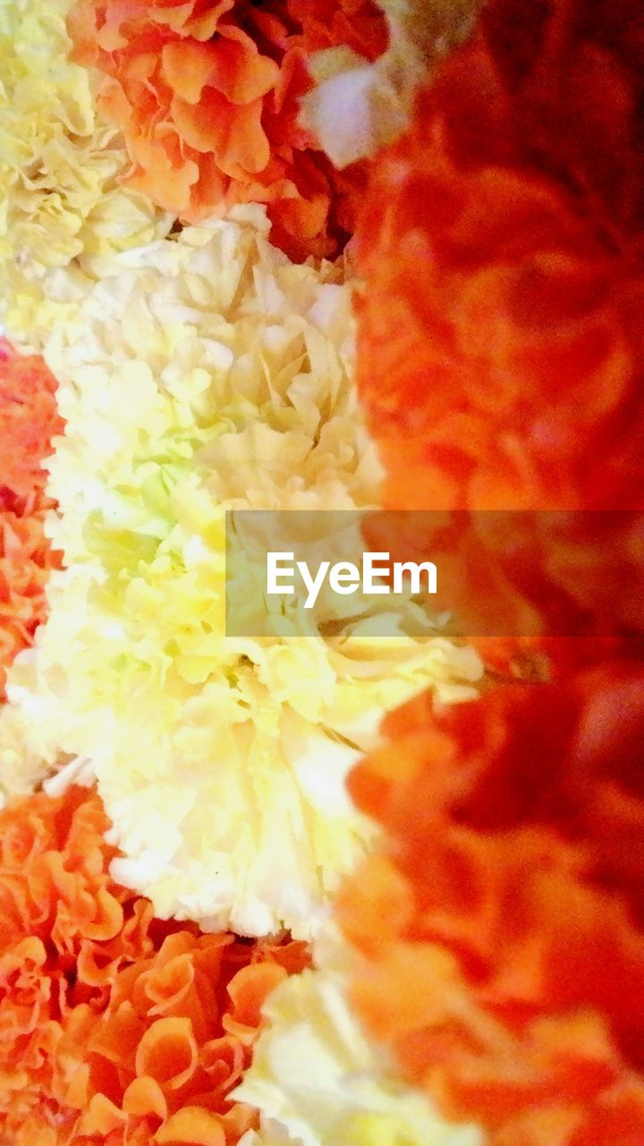 orange color, freshness, flower, close-up, marigold, no people, full frame, red, food, indoors, fragility, beauty in nature, day, flower head