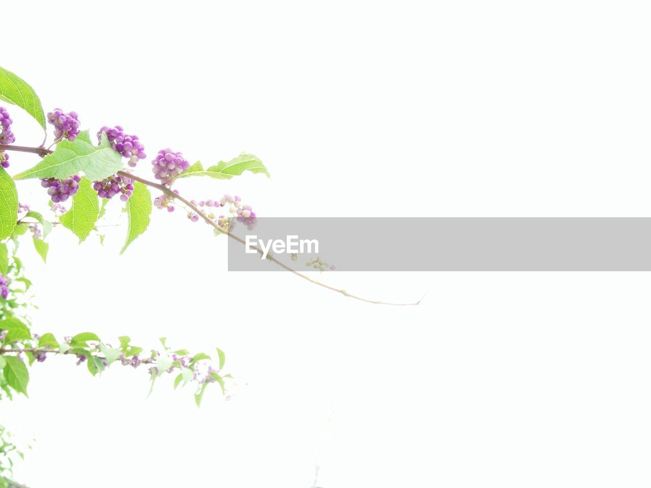 Close-up view of purple flowers on green twig