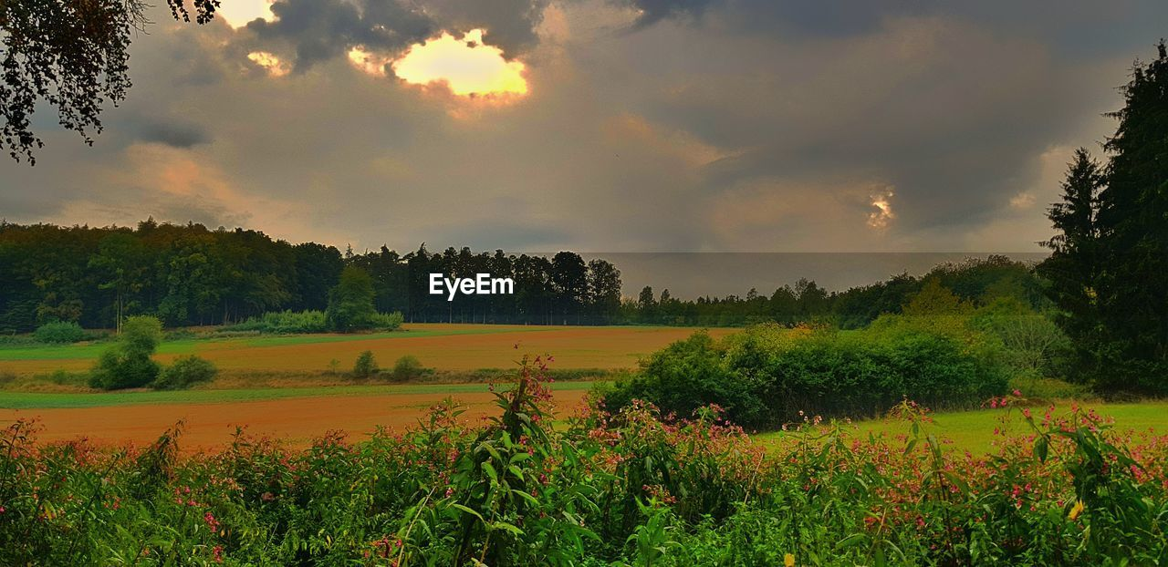 beauty in nature, sky, plant, cloud - sky, tranquility, scenics - nature, tree, growth, tranquil scene, landscape, field, land, environment, nature, rural scene, no people, sunset, non-urban scene, agriculture, idyllic, outdoors