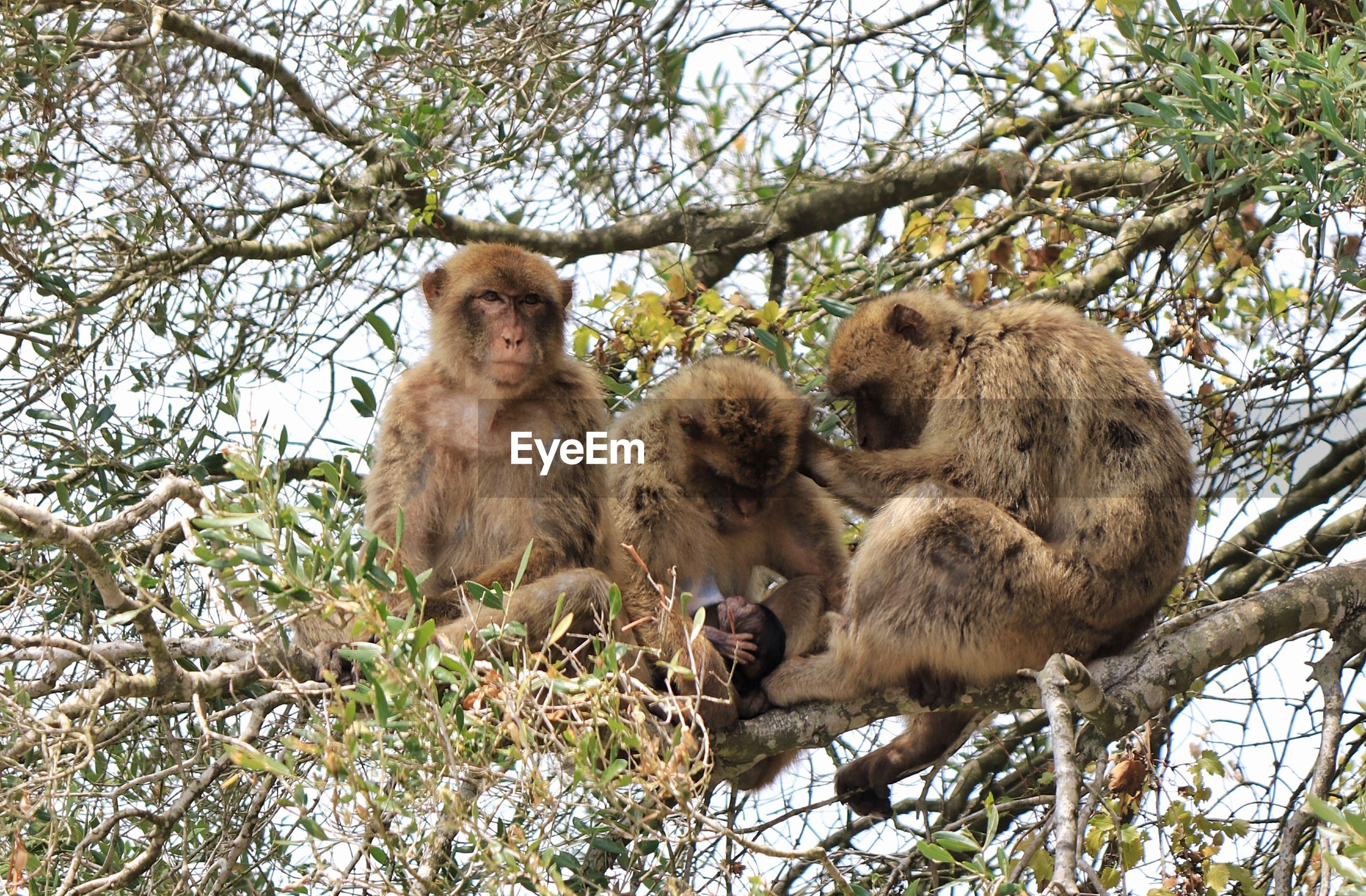 Low angle view of monkeys on tree in forest