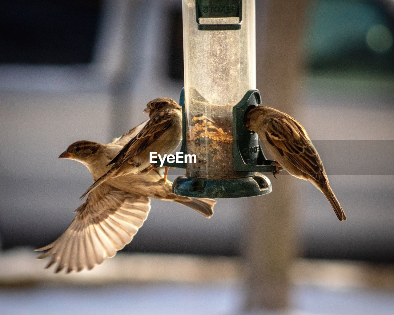 bird, animal, animal themes, vertebrate, animal wildlife, animals in the wild, focus on foreground, flying, spread wings, bird feeder, one animal, no people, day, mid-air, close-up, nature, motion, outdoors, flapping