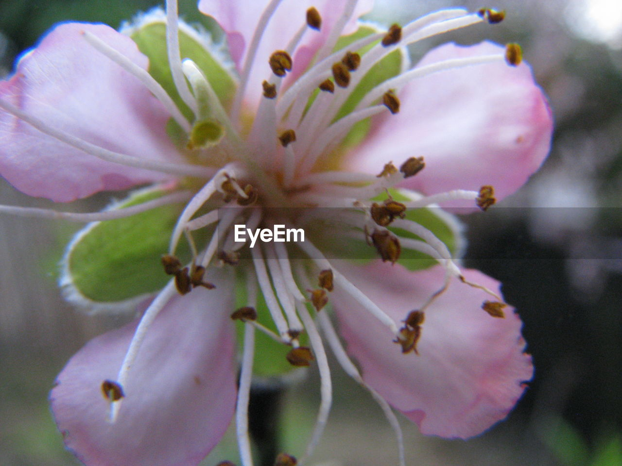 flower, petal, growth, fragility, flower head, beauty in nature, stamen, blossom, nature, springtime, pollen, freshness, close-up, no people, selective focus, day, plant, outdoors, pink color, tree, blooming, branch