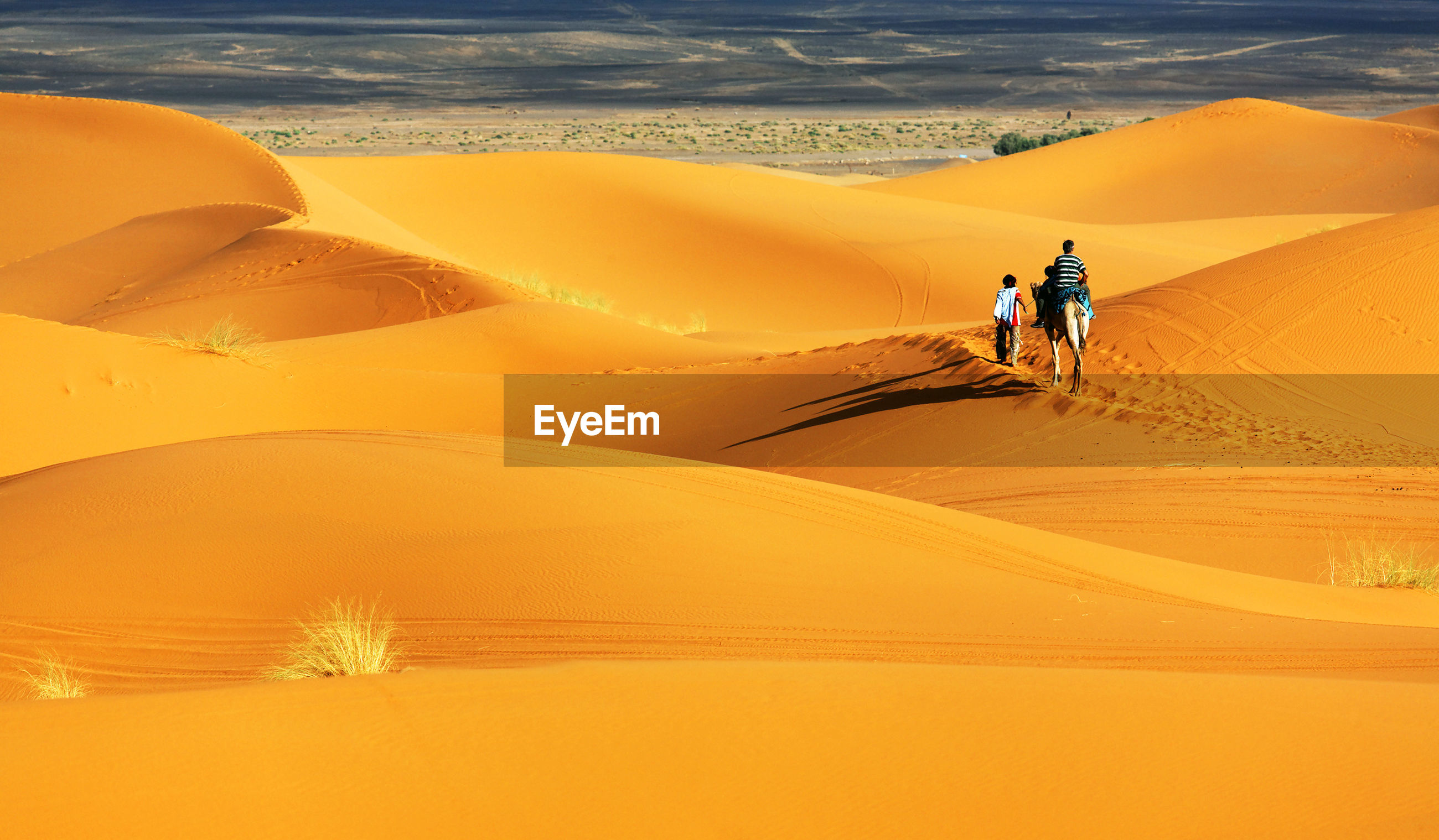 Rear view of people with camel on sand dunes