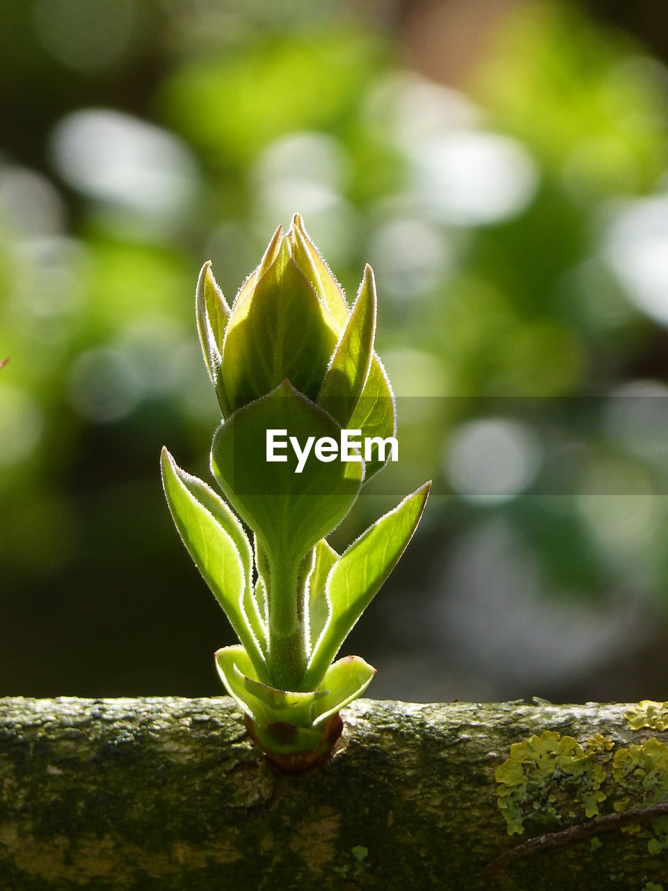 growth, green color, nature, plant, no people, close-up, day, focus on foreground, beauty in nature, outdoors, leaf, freshness, fragility