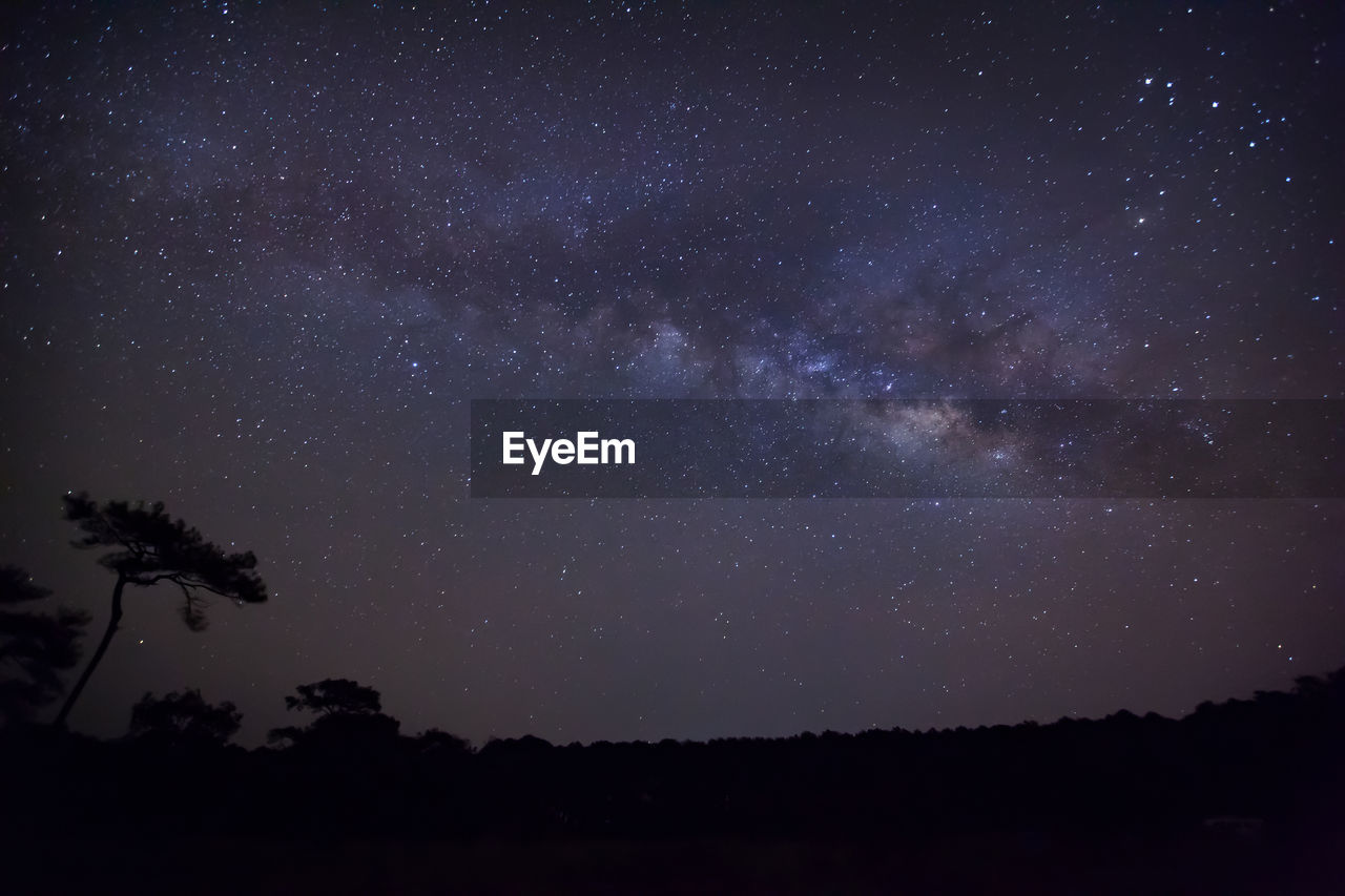sky, night, tranquility, beauty in nature, silhouette, astronomy, space, scenics - nature, tree, tranquil scene, star - space, plant, nature, no people, star, low angle view, galaxy, idyllic, star field, outdoors, milky way