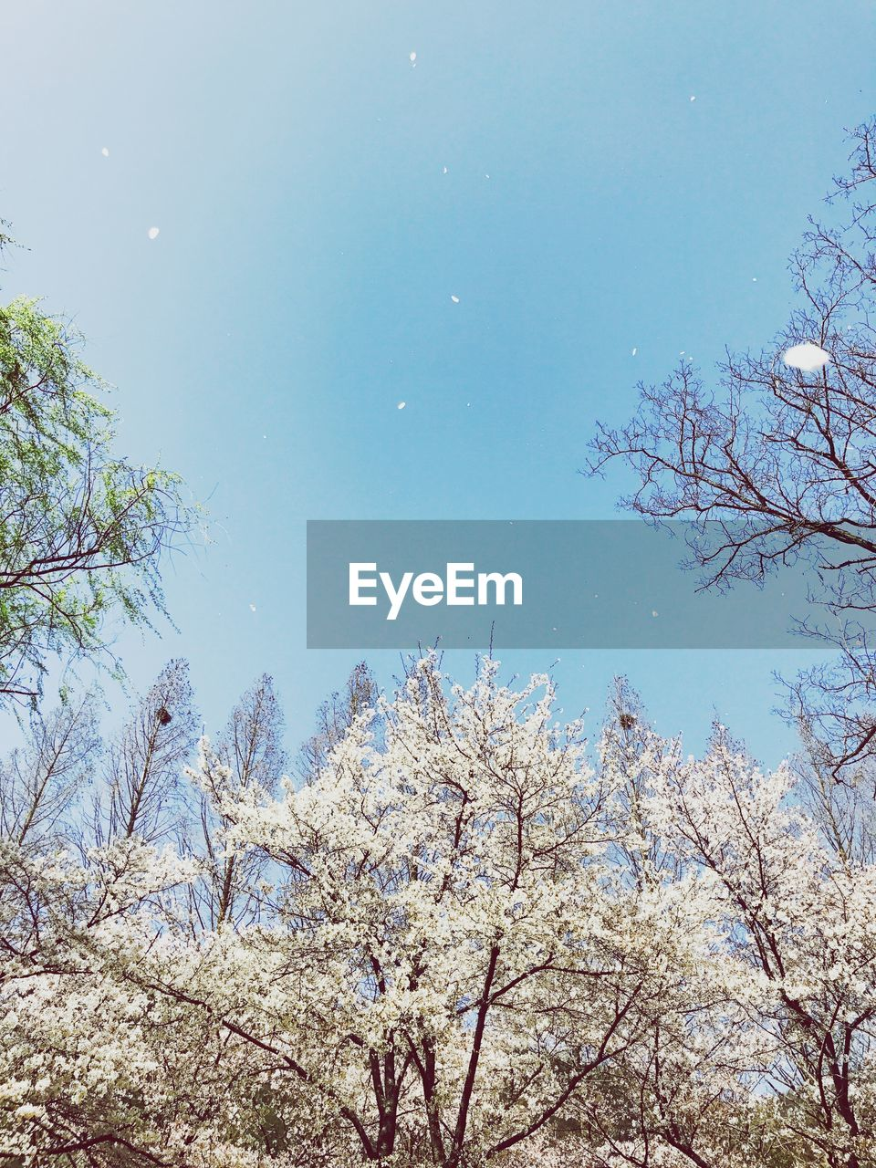 tree, nature, beauty in nature, branch, low angle view, growth, flower, no people, day, tranquility, sky, outdoors, fragility, scenics, freshness, clear sky