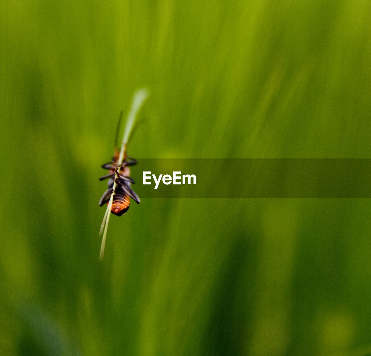 one animal, insect, green color, animals in the wild, animal themes, nature, animal wildlife, growth, no people, close-up, day, plant, outdoors, grass, beauty in nature, damselfly