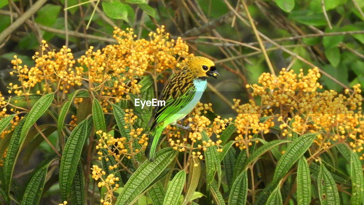 one animal, flower, animals in the wild, animal themes, nature, beauty in nature, growth, yellow, outdoors, animal wildlife, plant, day, no people, bird, green color, perching, fragility, close-up, flower head, freshness