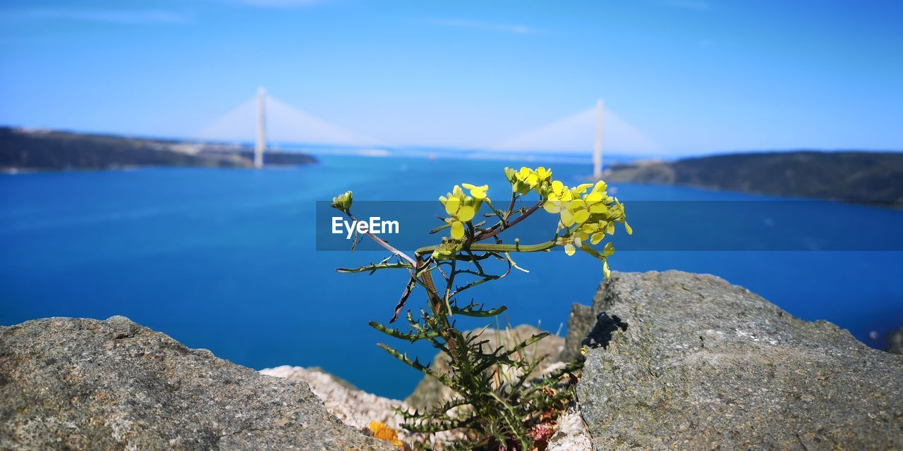 water, beauty in nature, rock, nature, rock - object, solid, tranquility, plant, sea, day, tranquil scene, no people, scenics - nature, blue, sky, vulnerability, fragility, focus on foreground, flower, outdoors, bay