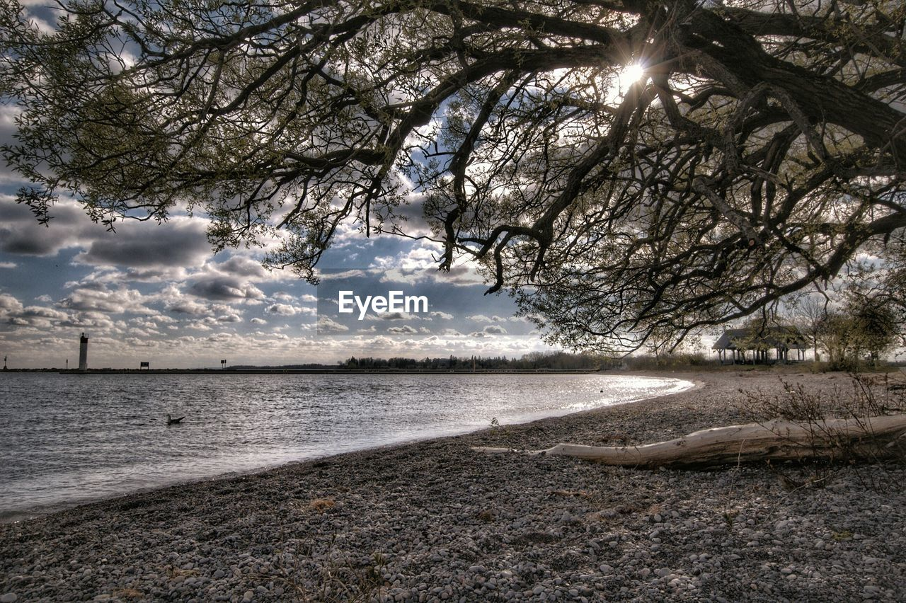 tree, water, beauty in nature, nature, tranquility, scenics, branch, tranquil scene, sky, outdoors, no people, day, sea, bare tree, beach
