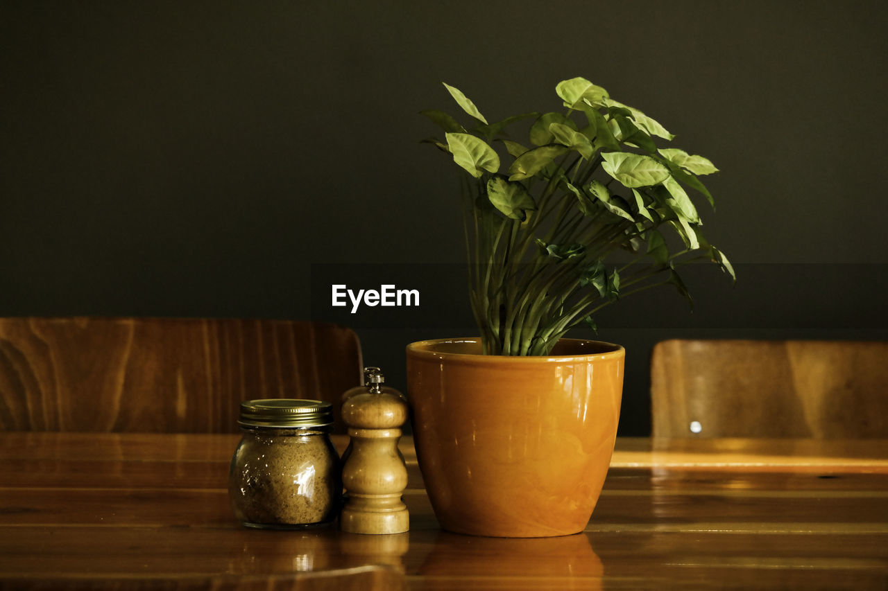 Potted plant by salt and pepper shakers on wooden table in cafe