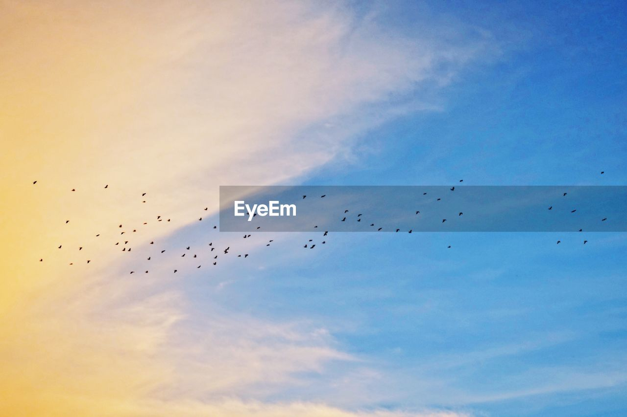 flying, cloud - sky, sky, animal themes, bird, animal wildlife, animal, vertebrate, group of animals, animals in the wild, mid-air, low angle view, large group of animals, flock of birds, no people, beauty in nature, animal migration, nature, motion, sunset, outdoors