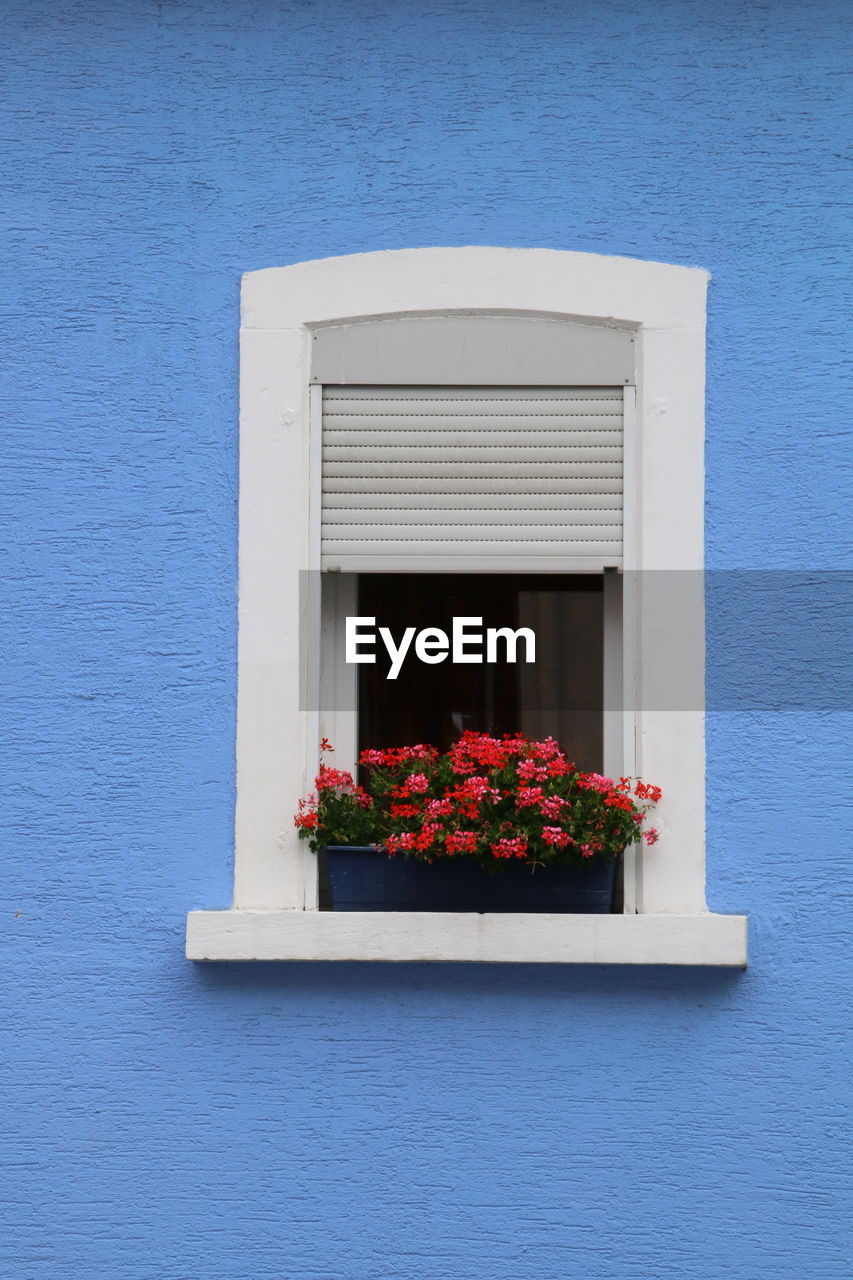 flower, no people, built structure, blue, fragility, nature, architecture, window, whitewashed, plant, outdoors, building exterior, day, growth, red, window box, beauty in nature, flower head