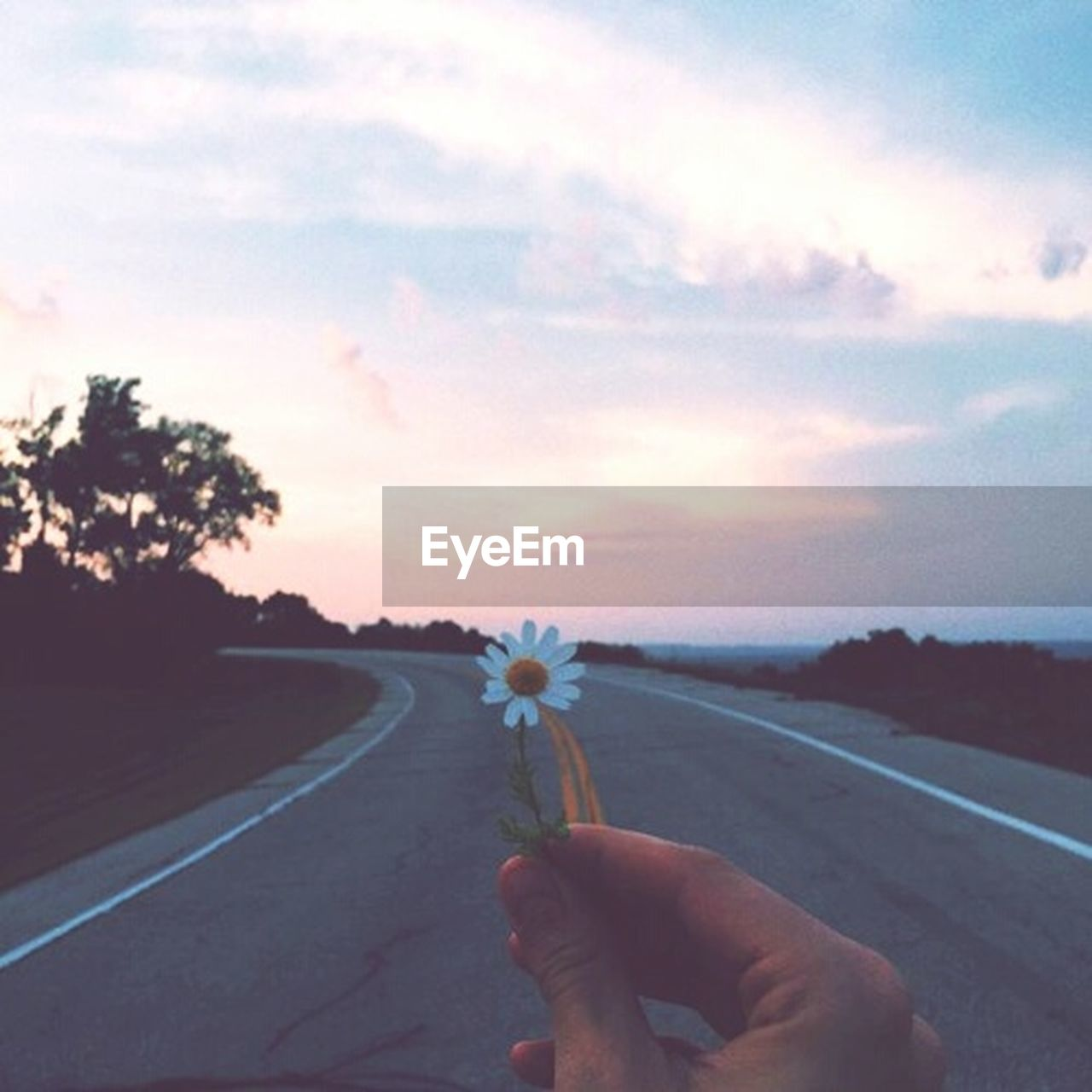 human hand, road, human body part, one person, sky, transportation, sunset, holding, cloud - sky, outdoors, the way forward, flower, real people, nature, tree, men, one man only, close-up, day, adult, people, only men, adults only