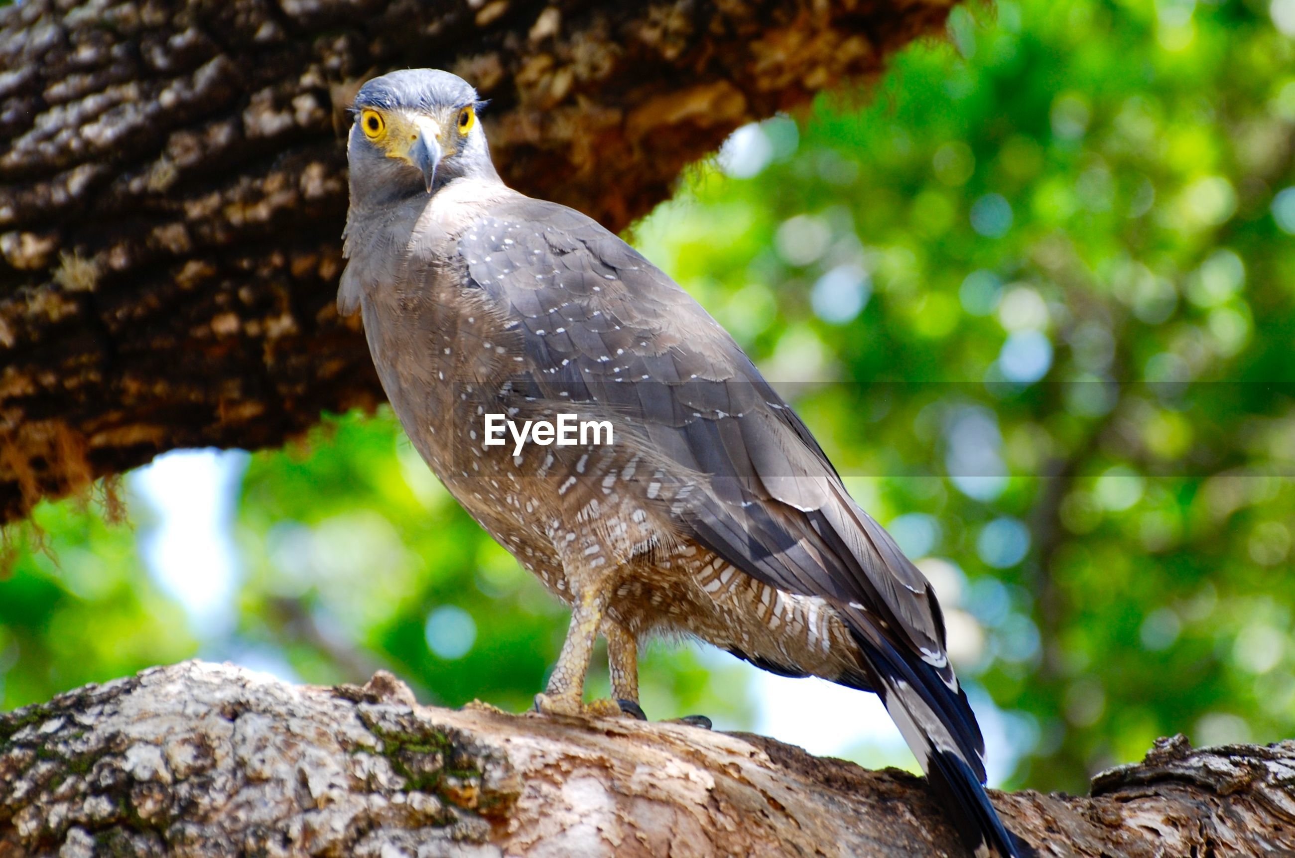 BIRD PERCHING ON ROCK AGAINST TREES