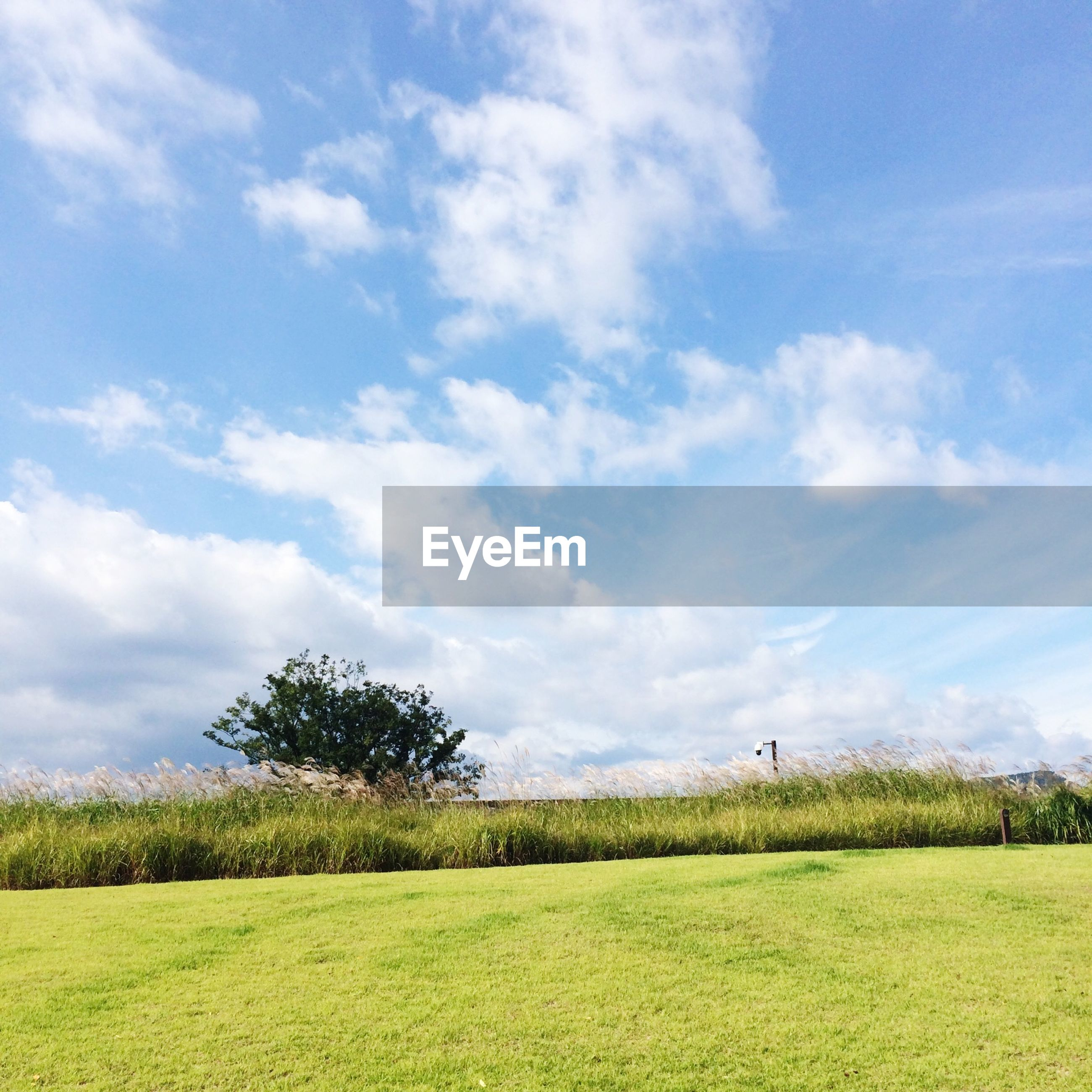 sky, grass, field, tranquil scene, landscape, tranquility, scenics, beauty in nature, cloud - sky, tree, green color, nature, cloud, grassy, growth, rural scene, cloudy, agriculture, blue, idyllic