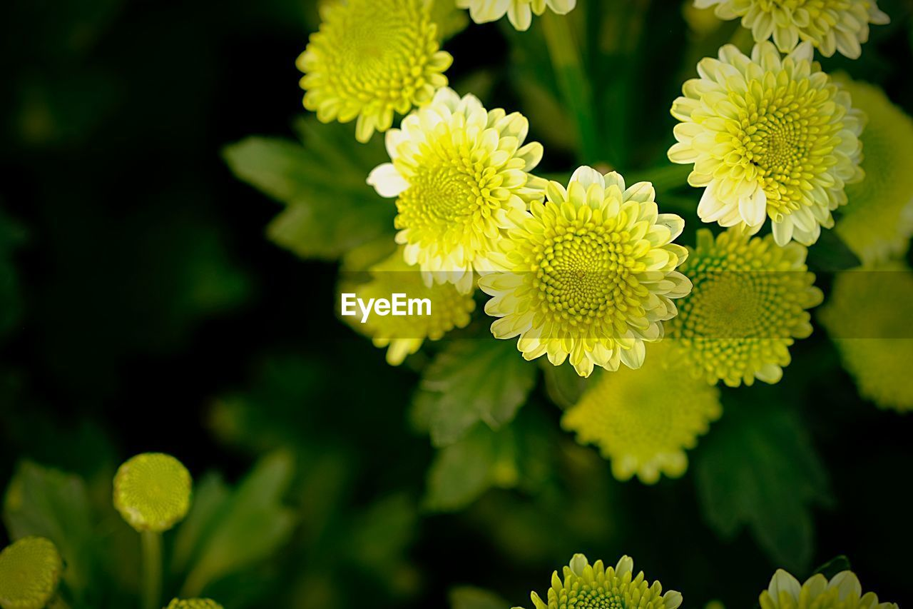 flower, flowering plant, plant, growth, fragility, yellow, beauty in nature, vulnerability, flower head, inflorescence, freshness, close-up, petal, focus on foreground, nature, green color, day, no people, leaf, plant part, outdoors, pollen