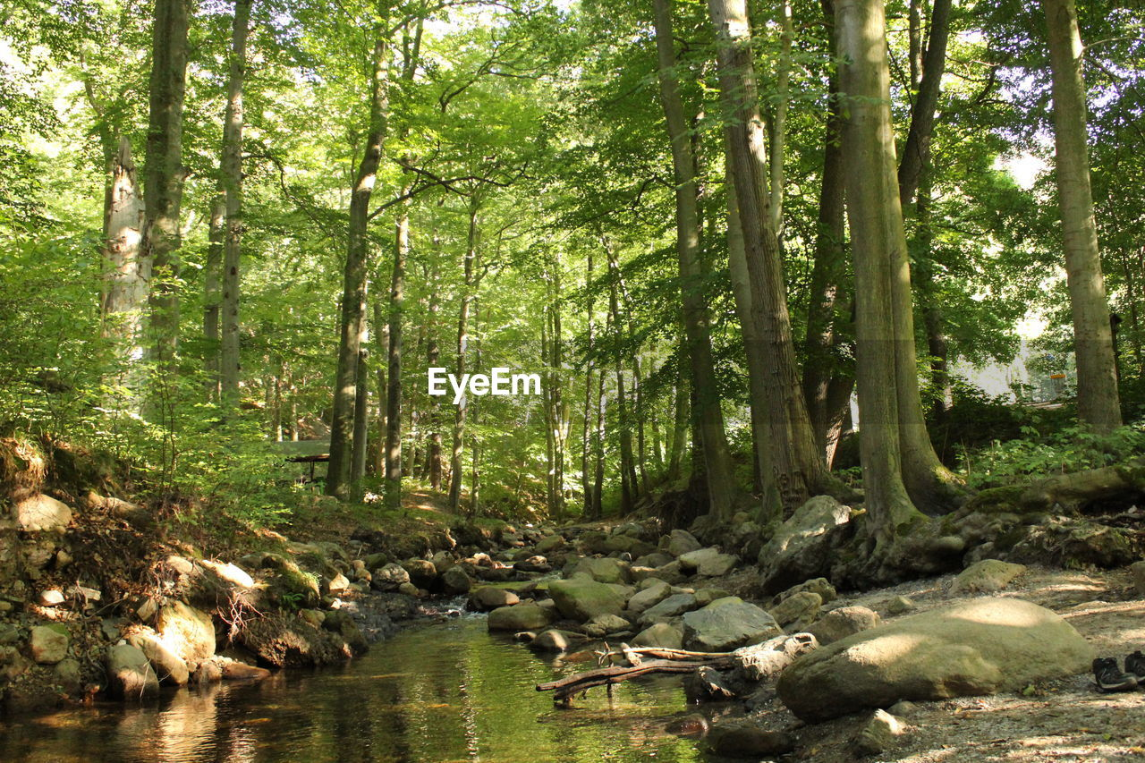 forest, tree, plant, water, land, nature, tranquility, woodland, day, scenics - nature, beauty in nature, no people, environment, tranquil scene, tree trunk, growth, sunlight, non-urban scene, green color, outdoors, stream - flowing water, flowing water, flowing