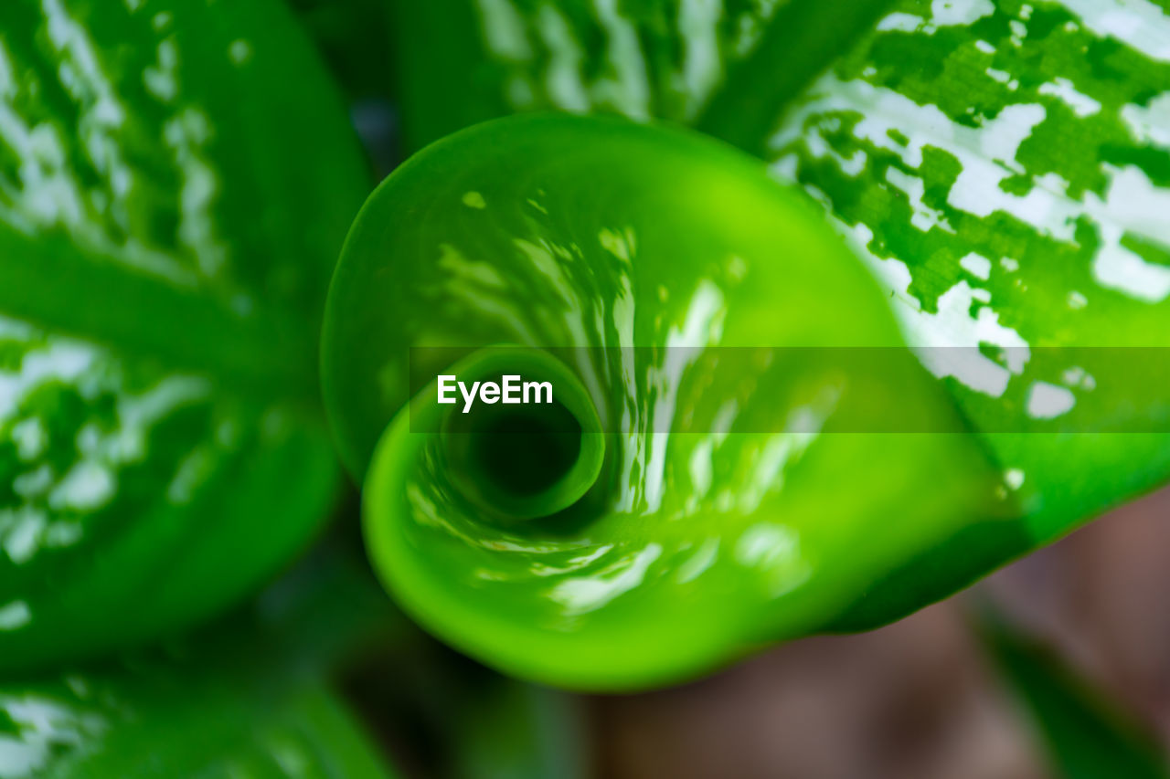 green color, close-up, plant, freshness, no people, growth, beauty in nature, focus on foreground, nature, vegetable, day, food, food and drink, leaf, plant part, outdoors, healthy eating, selective focus, wellbeing, vulnerability