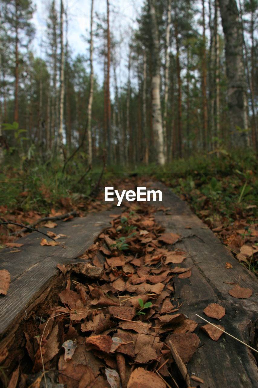 forest, leaf, nature, autumn, tree, change, tranquility, outdoors, day, abundance, fallen, tree trunk, no people, the way forward, beauty in nature, growth, scenics