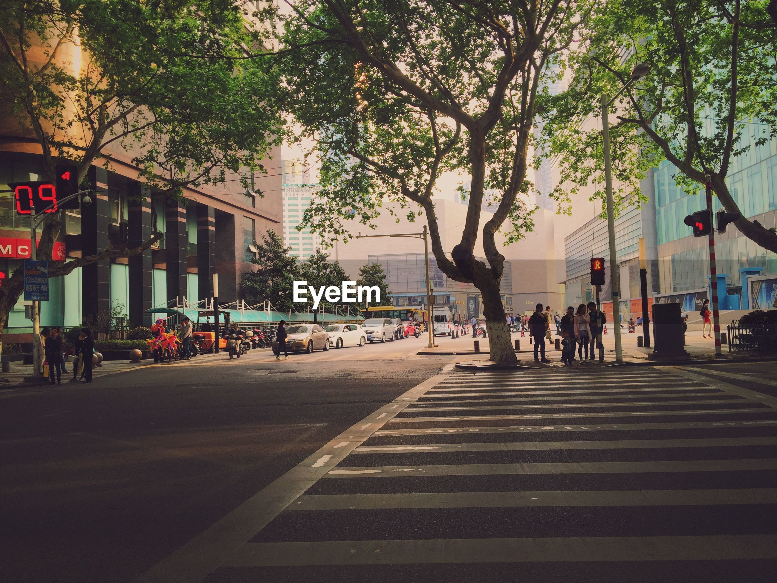 large group of people, person, building exterior, tree, men, architecture, city, lifestyles, built structure, street, walking, city life, leisure activity, mixed age range, medium group of people, group of people, outdoors, the way forward, road