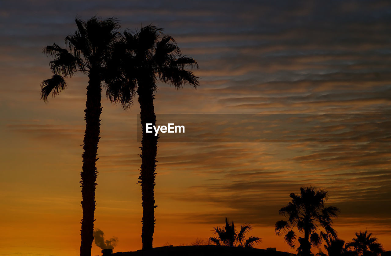 sunset, sky, palm tree, silhouette, tree, cloud - sky, beauty in nature, scenics - nature, tropical climate, plant, growth, no people, orange color, nature, tranquil scene, tranquility, low angle view, outdoors, dramatic sky, coconut palm tree, tropical tree, romantic sky, palm leaf