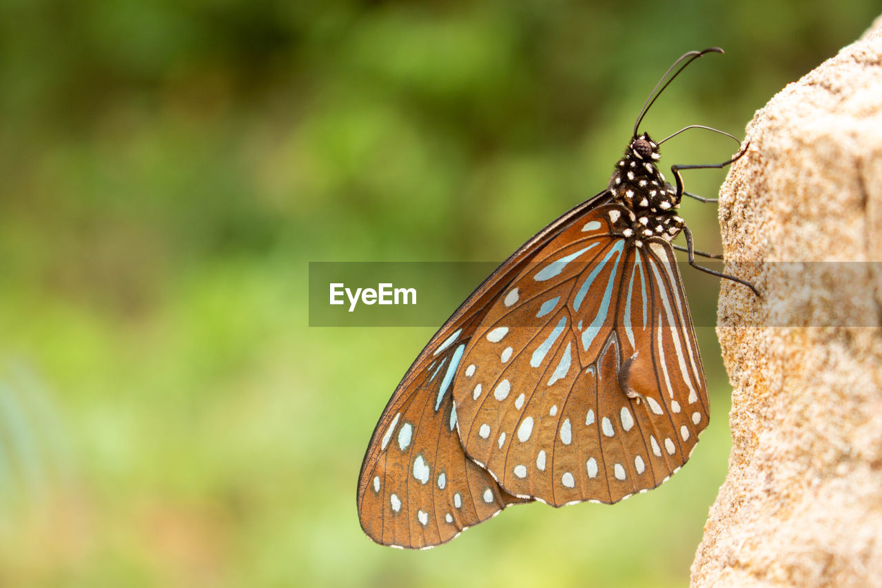 animal wildlife, invertebrate, insect, animal themes, animal, animals in the wild, one animal, butterfly - insect, animal wing, close-up, focus on foreground, beauty in nature, nature, animal markings, day, no people, plant, natural pattern, butterfly, animal antenna