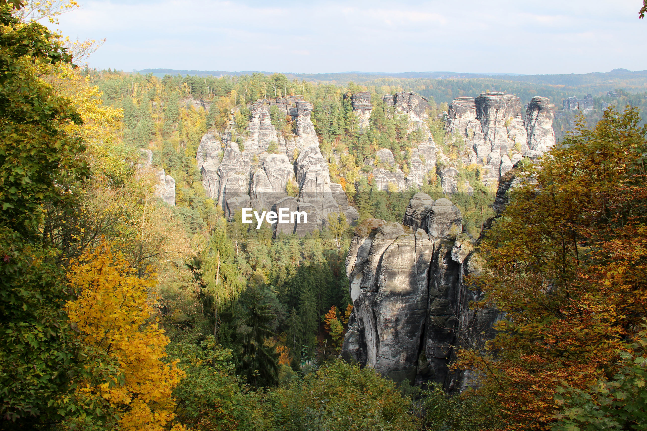 PANORAMIC VIEW OF AUTUMN TREES