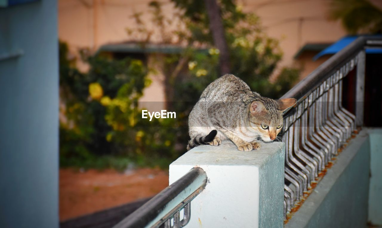 mammal, animal themes, animal, one animal, domestic, pets, domestic animals, cat, feline, vertebrate, domestic cat, railing, focus on foreground, architecture, no people, day, selective focus, built structure, looking, outdoors, whisker