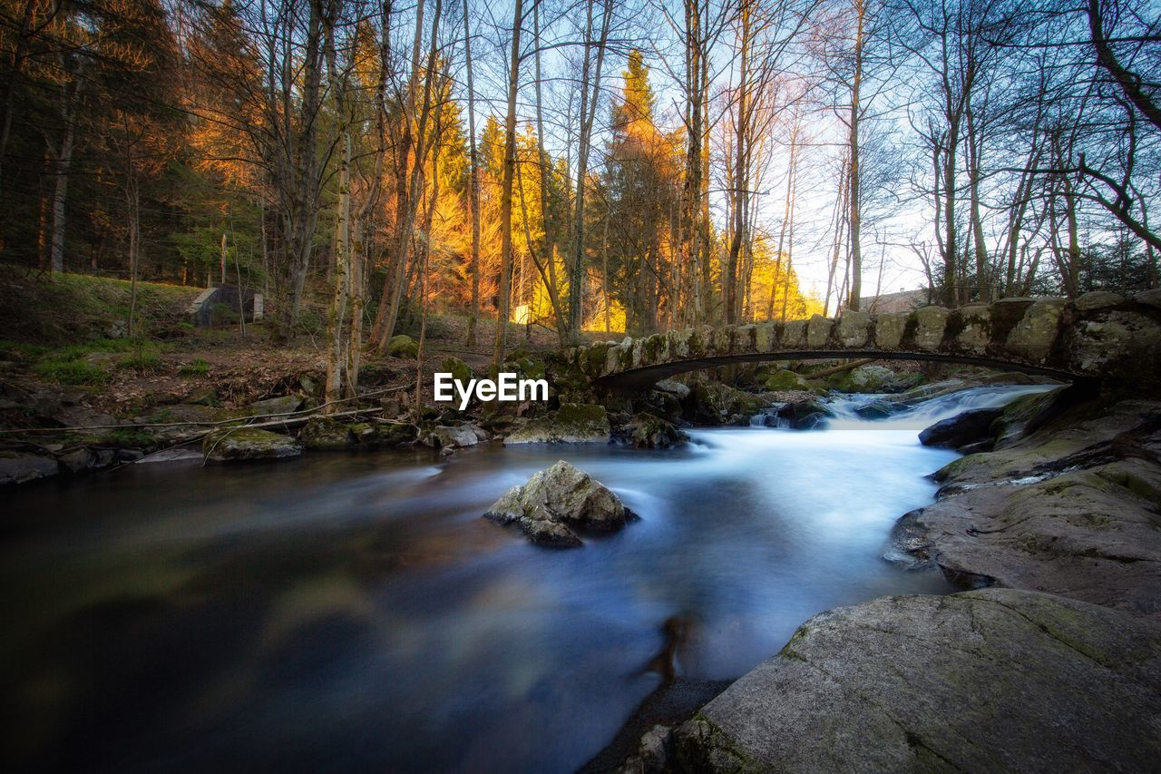 tree, water, beauty in nature, forest, plant, scenics - nature, nature, land, autumn, flowing water, no people, motion, long exposure, tranquility, non-urban scene, rock, solid, change, tranquil scene, flowing, outdoors, stream - flowing water, woodland, power in nature