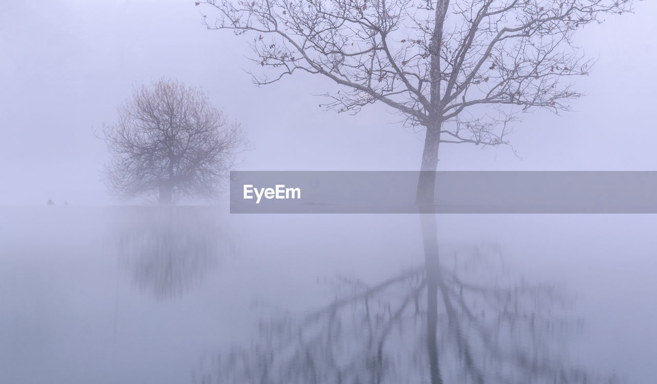 BARE TREES BY LAKE AGAINST SKY DURING FOGGY WEATHER