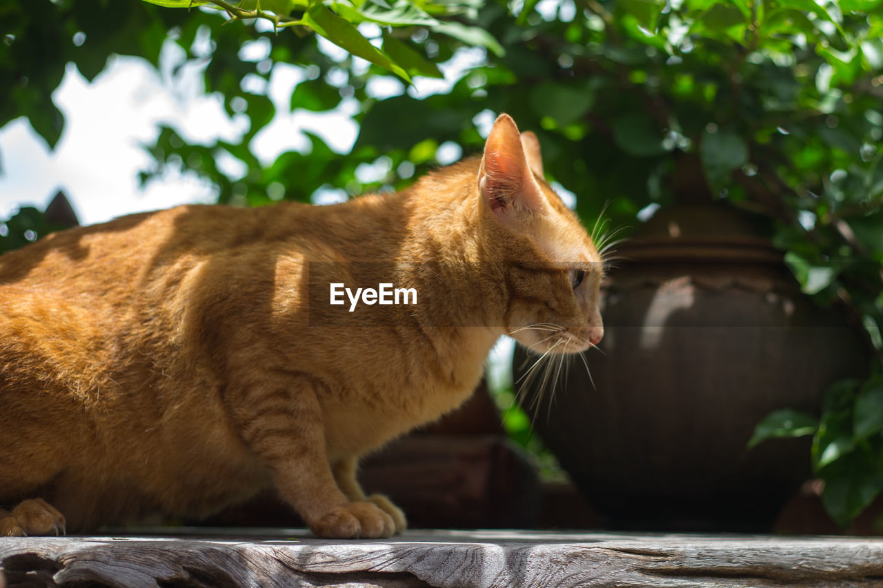 one animal, animal themes, domestic cat, mammal, feline, domestic animals, pets, no people, day, focus on foreground, outdoors, tree, sitting, nature, close-up