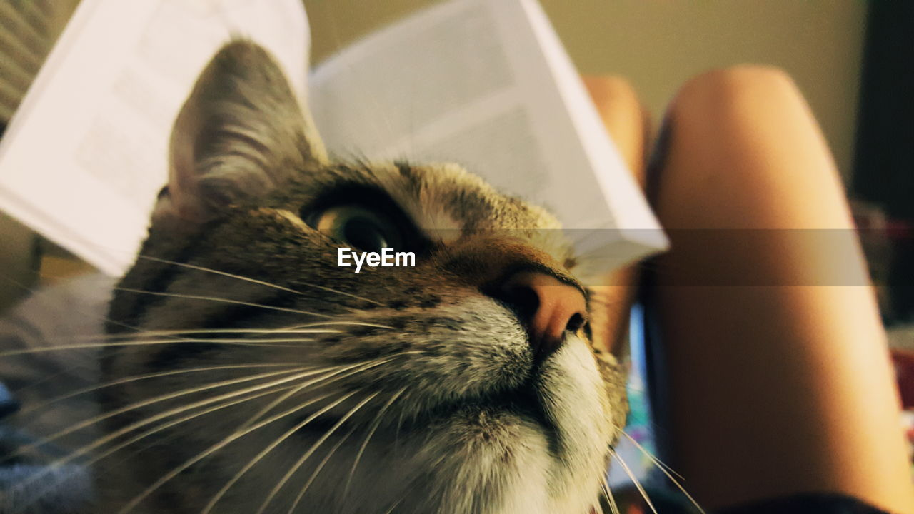 domestic cat, one animal, pets, domestic animals, animal themes, mammal, feline, whisker, indoors, close-up, cat, animal head, one person, day, human body part, human hand