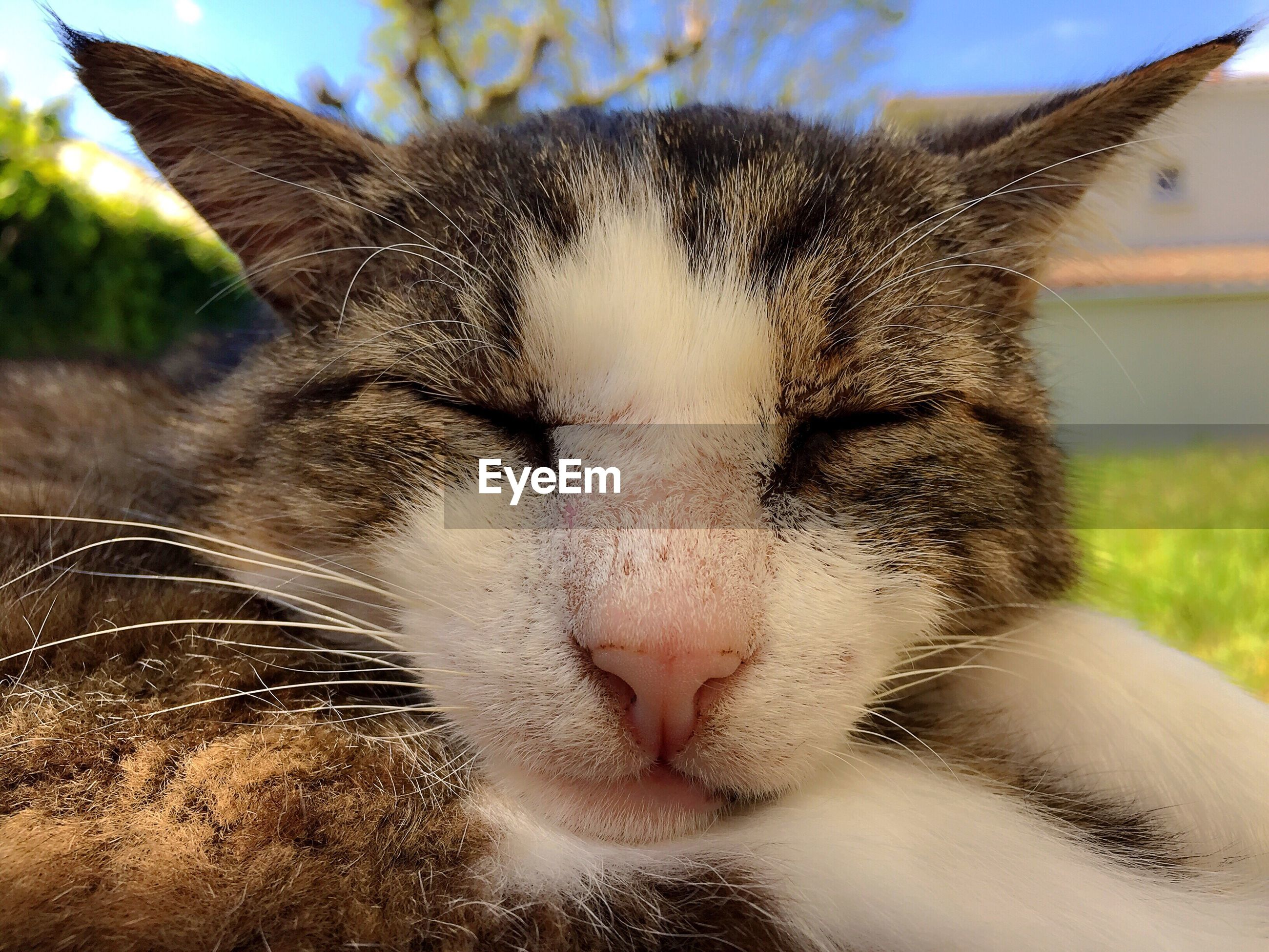 Close-up of cat with eyes closed