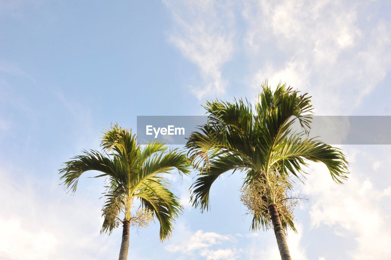 sky, palm tree, tropical climate, tree, cloud - sky, growth, low angle view, plant, beauty in nature, day, no people, nature, tranquility, scenics - nature, leaf, outdoors, tree trunk, sunlight, trunk, green color, palm leaf, tropical tree, coconut palm tree