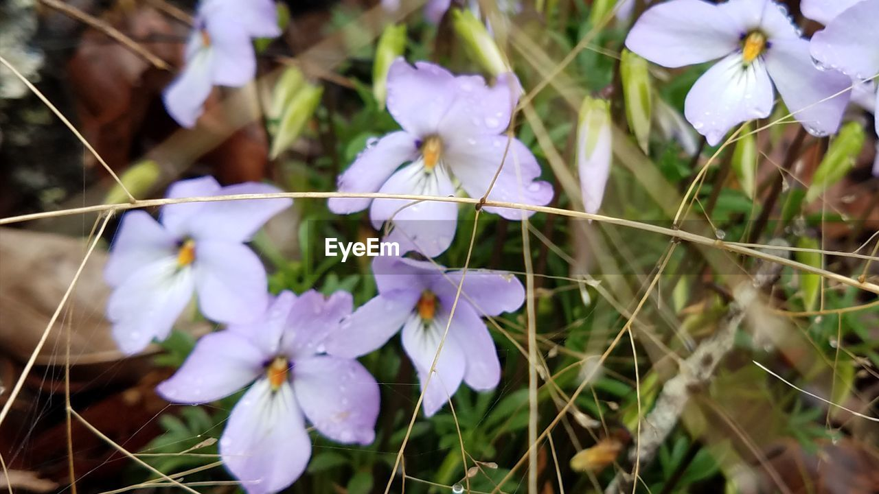 flower, growth, fragility, petal, beauty in nature, nature, freshness, no people, flower head, close-up, purple, plant, outdoors, day, blooming, grass