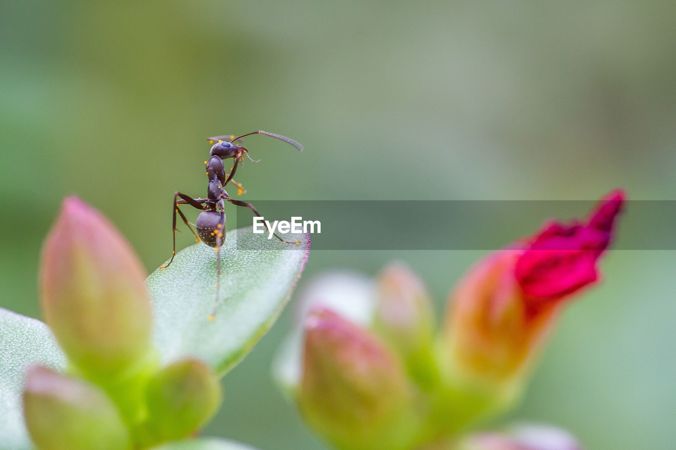 Ant on plant in park