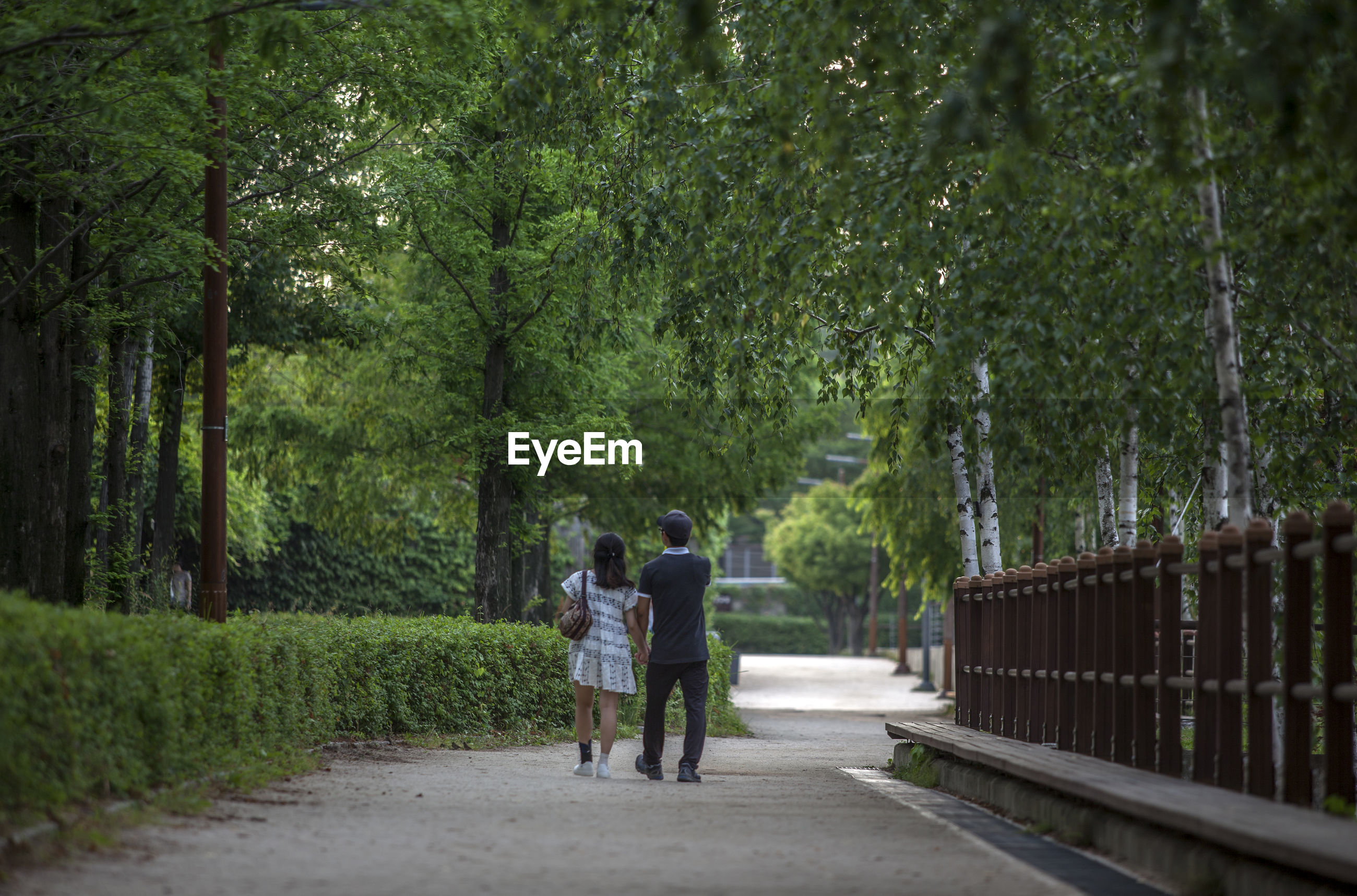 Rear view of couple walking on footpath amidst trees at park