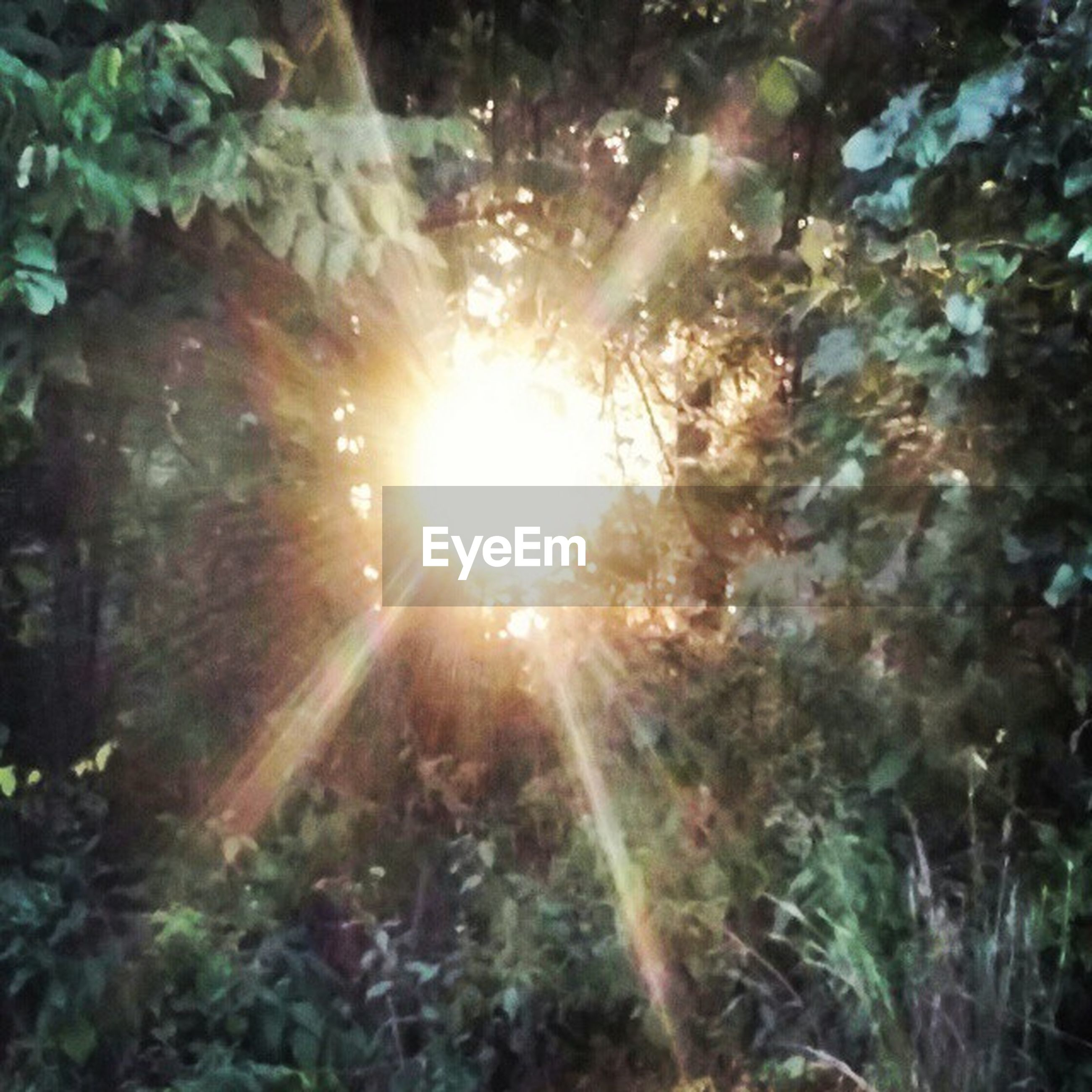 sun, sunlight, sunbeam, lens flare, growth, plant, nature, tranquility, forest, beauty in nature, tree, outdoors, day, leaf, no people, sunny, close-up, bright, growing, shiny