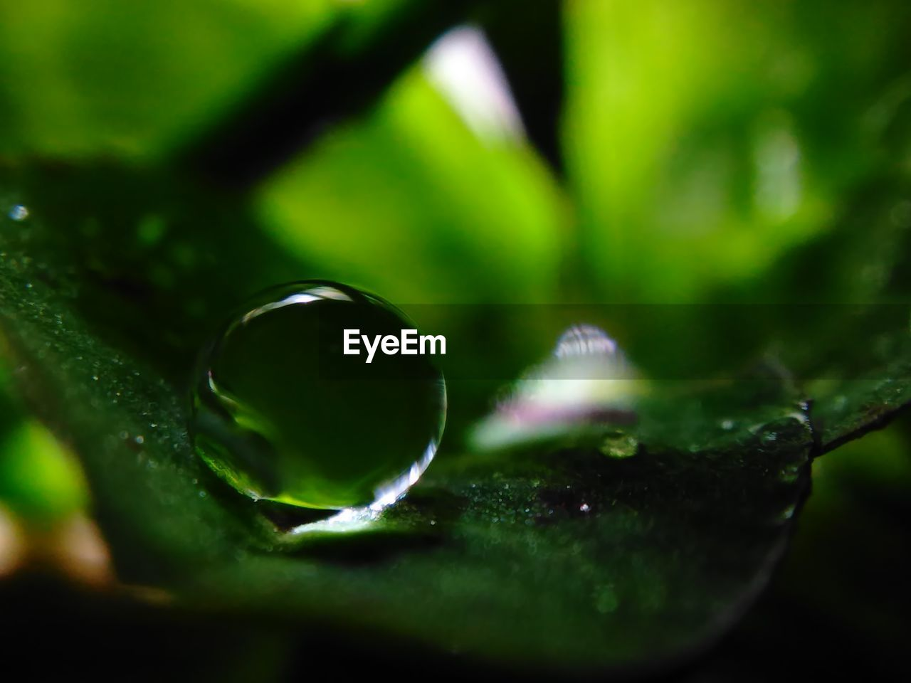 selective focus, green color, no people, close-up, nature, water, day, beauty in nature, fragility, outdoors, freshness
