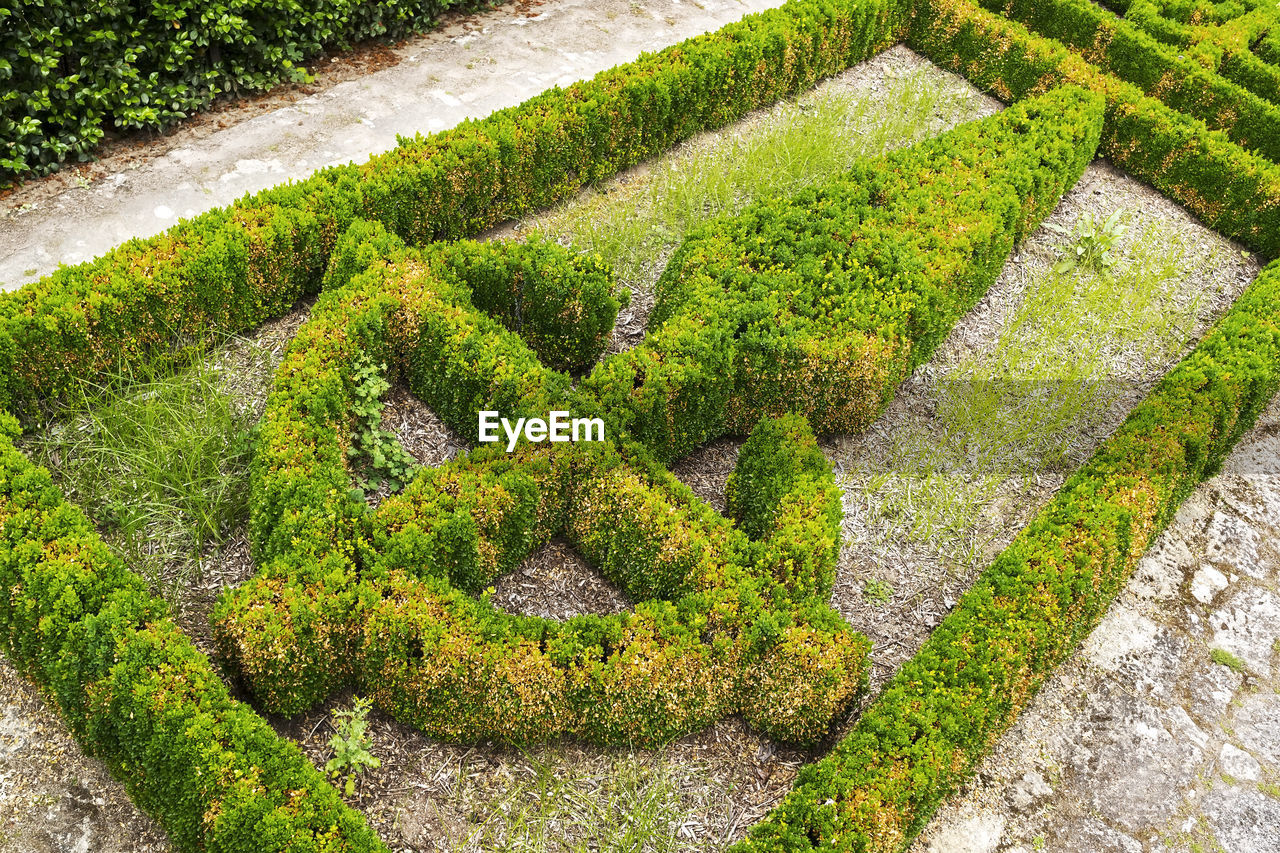 plant, green color, growth, beauty in nature, tranquility, high angle view, no people, nature, formal garden, hedge, tree, scenics - nature, day, garden, tranquil scene, topiary, moss, footpath, outdoors, land, garden path, ornamental garden