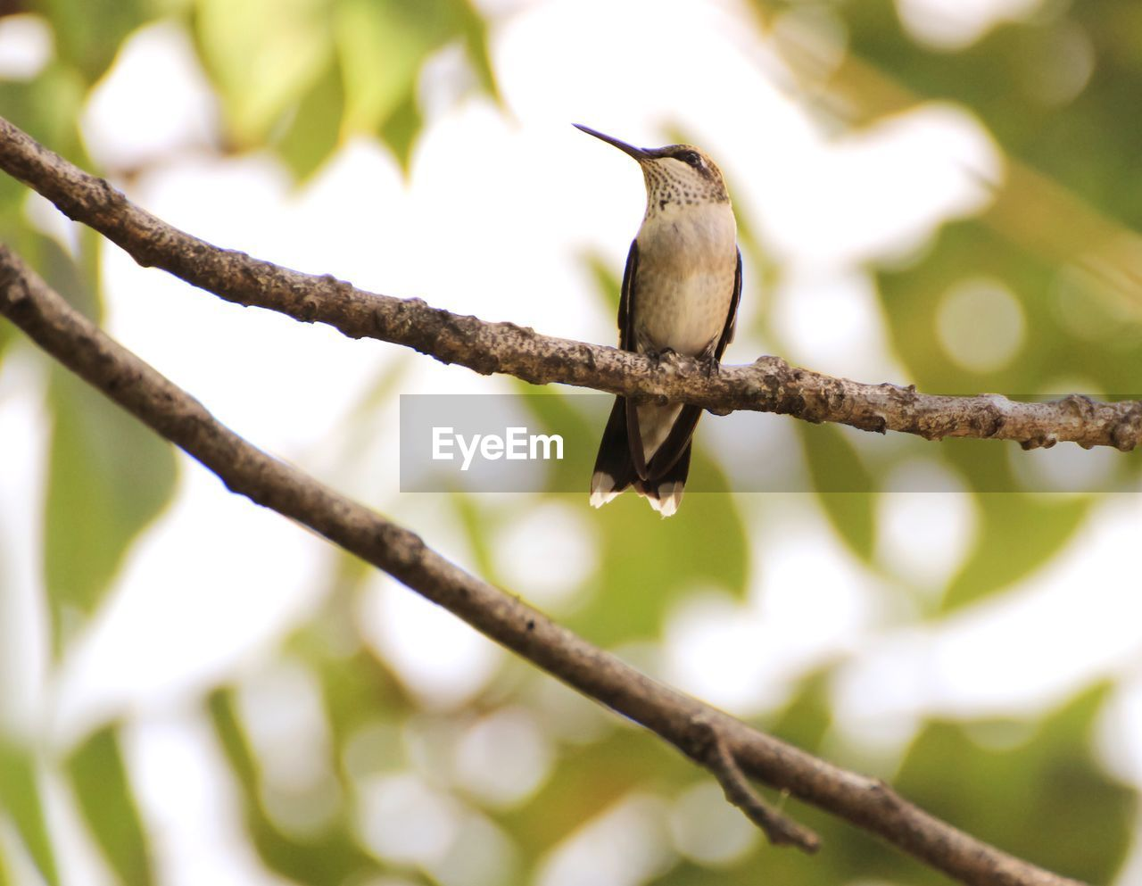 Low angle view of bird perching on branch