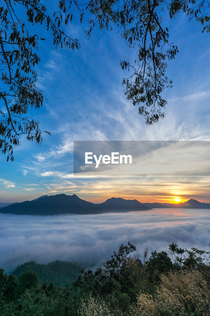 beauty in nature, tranquil scene, tranquility, nature, scenics, tree, sky, mountain, no people, cloud - sky, outdoors, idyllic, landscape, sunset, mountain range, growth, branch, day