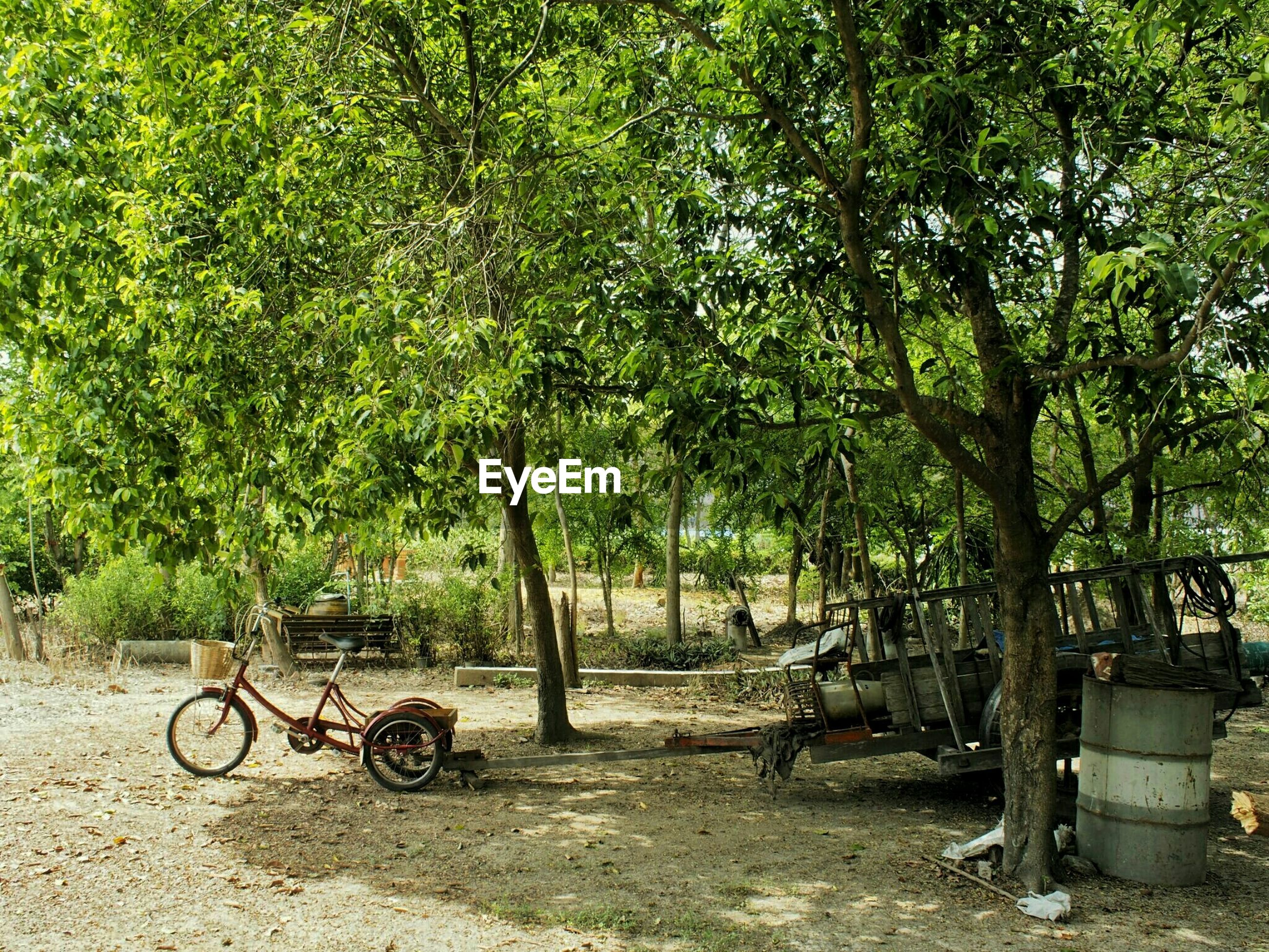 Tricycle parked under trees in garden