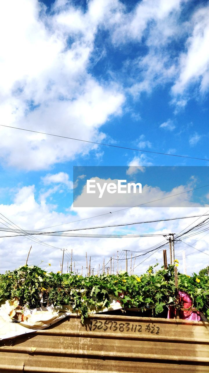 cloud - sky, sky, plant, nature, cable, day, architecture, electricity, power line, tree, built structure, growth, building exterior, outdoors, connection, no people, food and drink, low angle view, technology, blue, power supply, telephone line