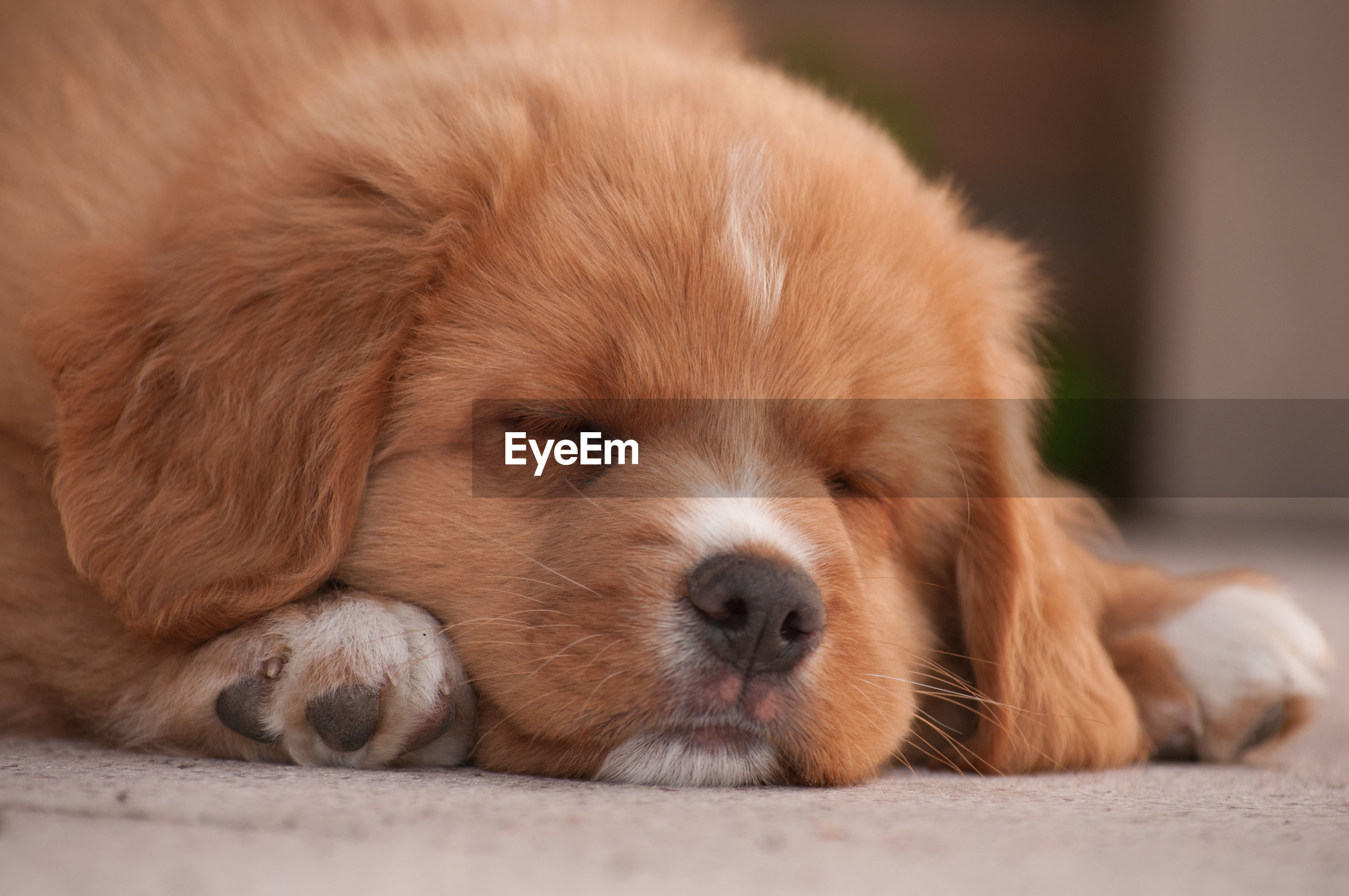 Close-up of puppy lying on footpath