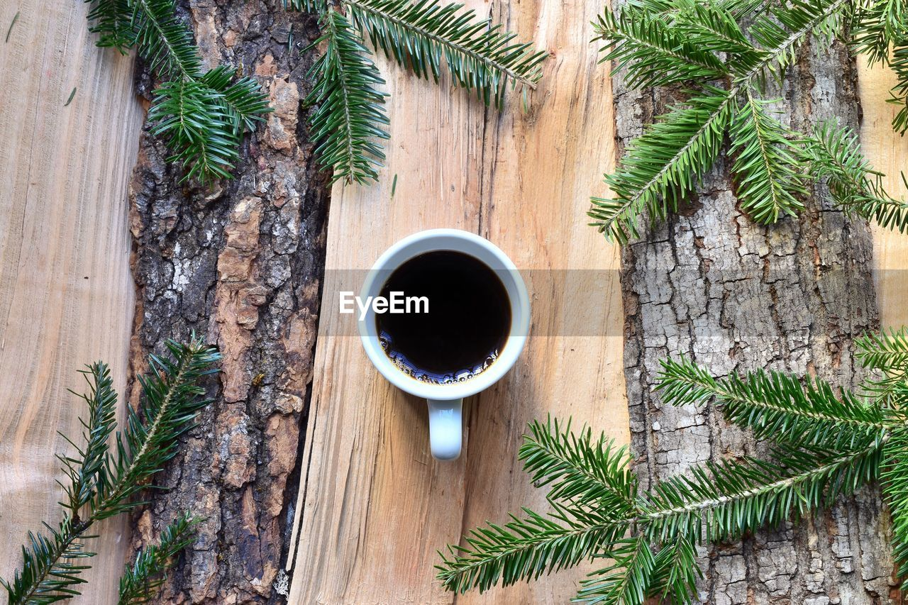 plant, directly above, food and drink, refreshment, leaf, drink, plant part, coffee, table, green color, cup, day, freshness, coffee - drink, wood - material, nature, no people, tree, growth, mug, non-alcoholic beverage