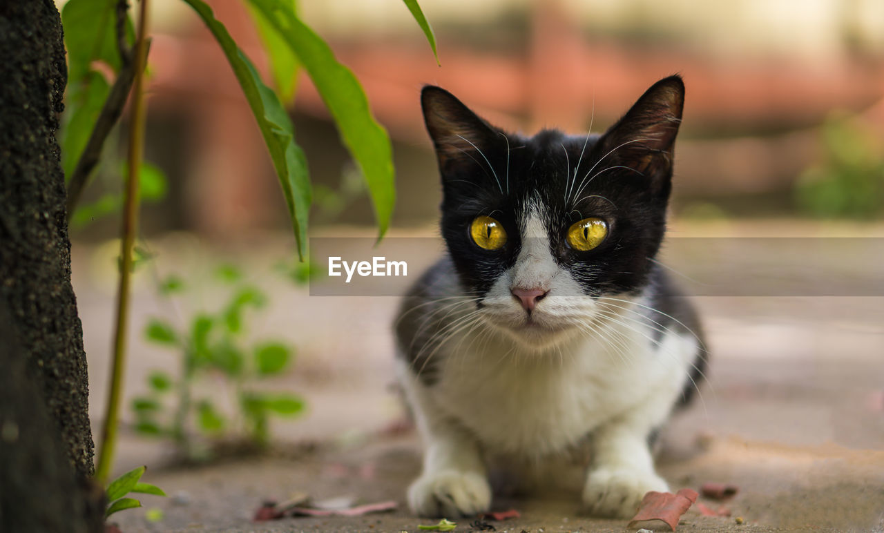 one animal, domestic animals, pets, domestic cat, cat, mammal, feline, domestic, vertebrate, portrait, looking at camera, focus on foreground, no people, day, whisker, black color, close-up, yellow eyes, animal eye